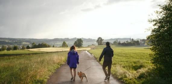 Guarda compartilhada de animais, uma realidade entre os casais separados